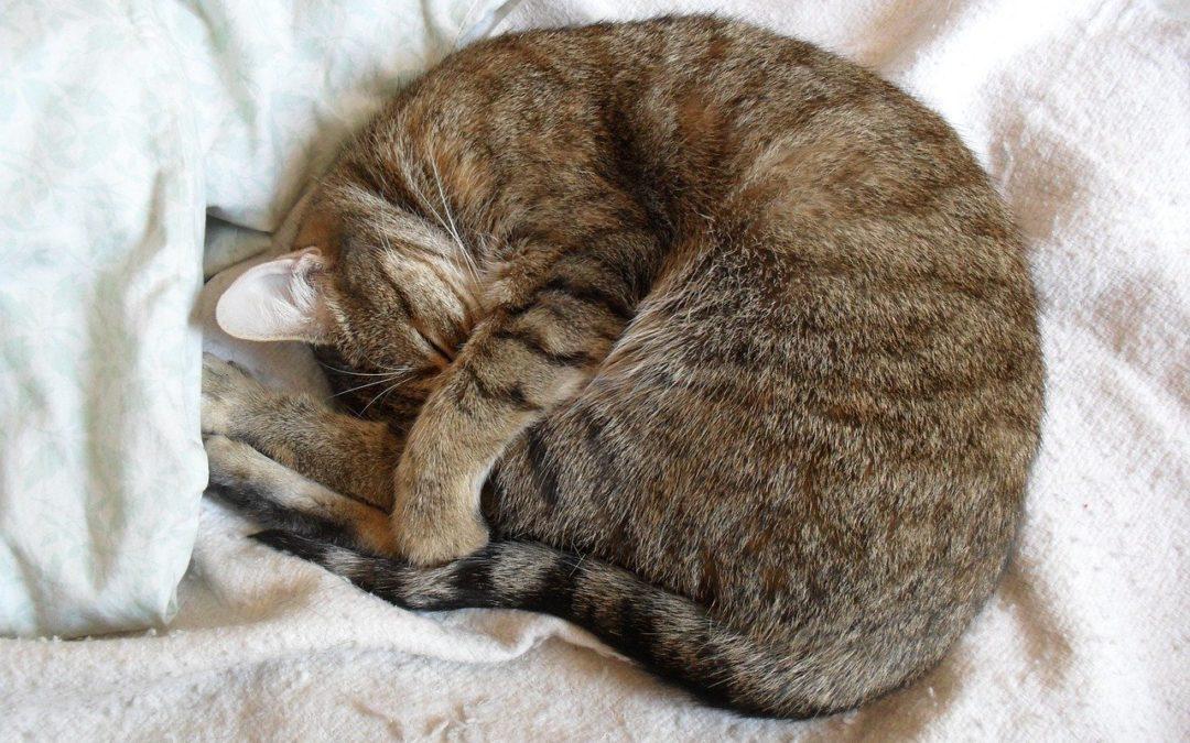夜里流口水的猫-为什么我的猫睡觉时会流口水?