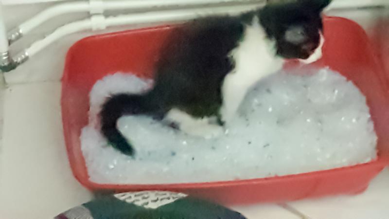 Comment habituer son chat à aller dans sa litière