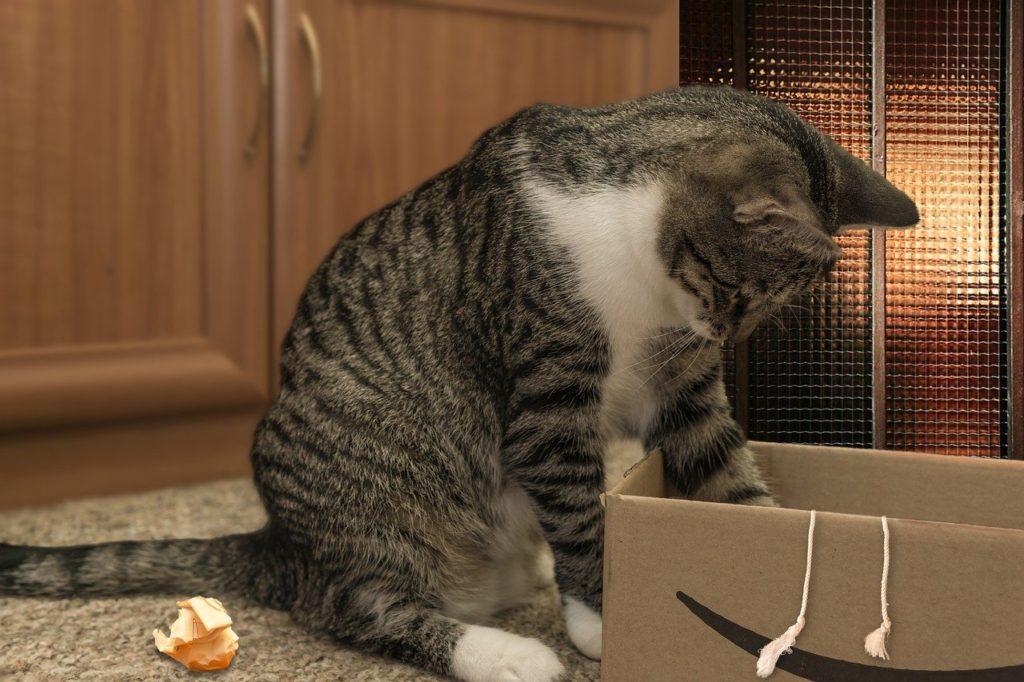 comment jouer avec son chat à cache cache