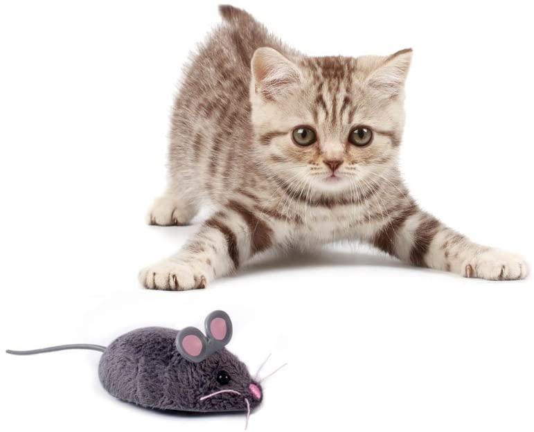 Comment jouer avec son chat avec une souris