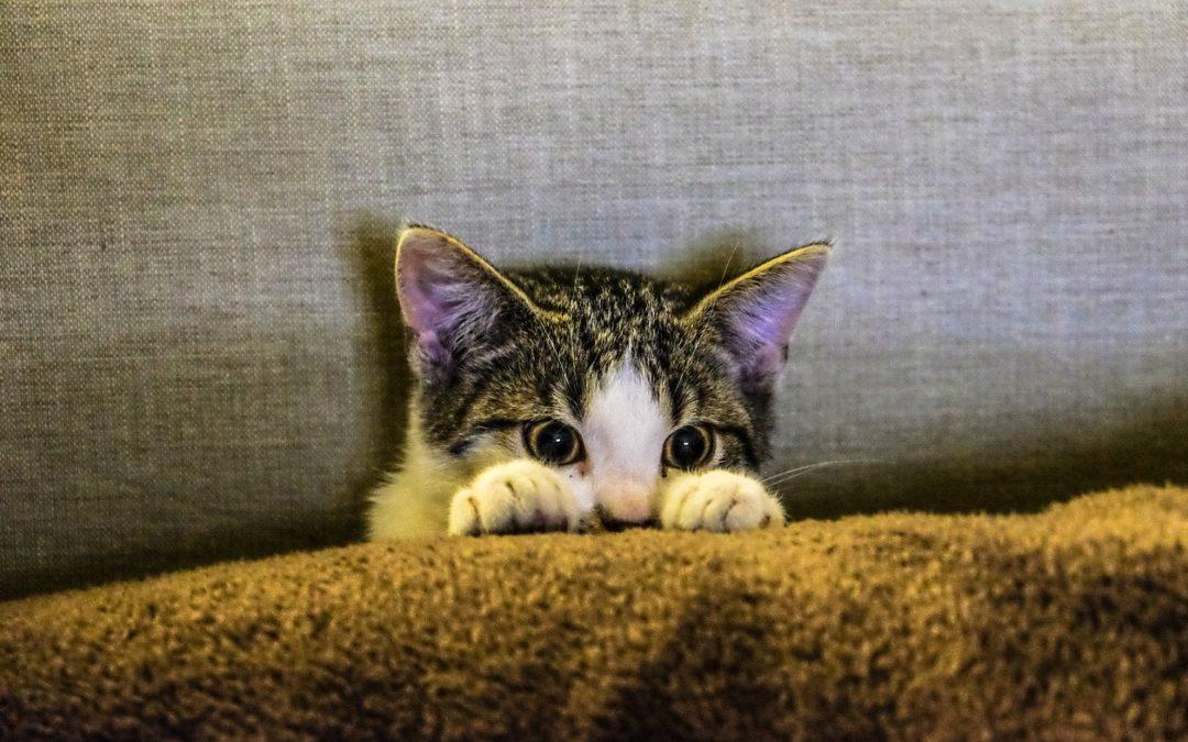Com que idade um gatinho perde os dentes de leite