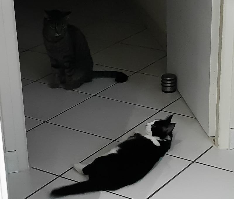 Mon chat n'accepte pas le nouveau chaton - Pourquoi mon chat est jaloux d'un chaton
