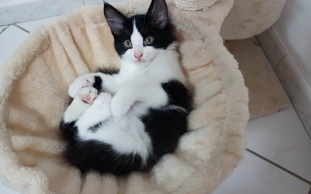 我的猫不接受新小猫-猫嫉妒小猫?