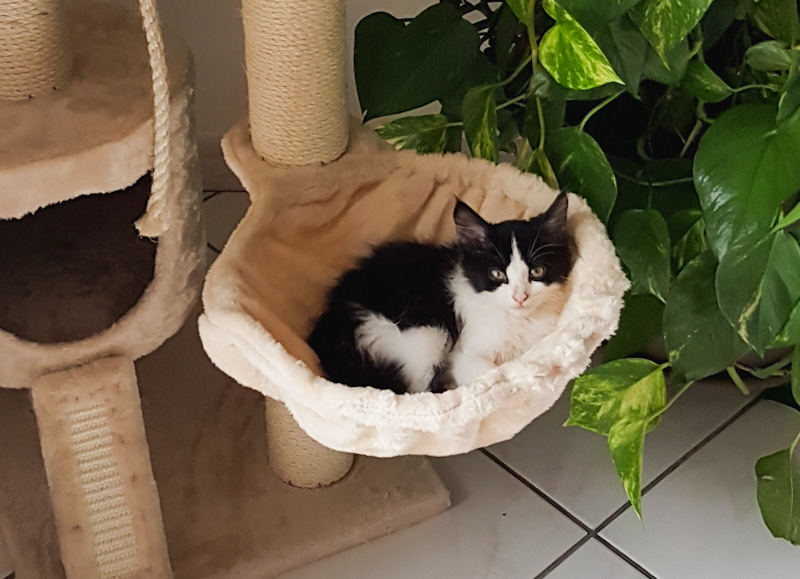 Hoe weet u of een kitten wordt gespeend? Wanneer moet je hem brokken geven?