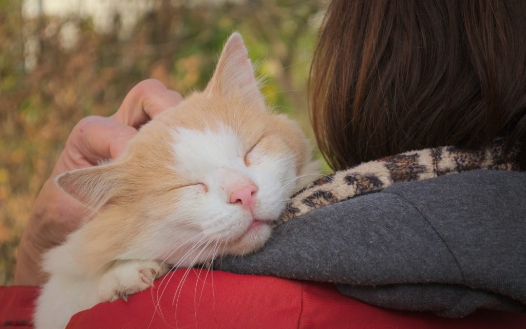 Mijn kat houdt te veel van mij - Nauwe relatie met haar gevaarlijke kat
