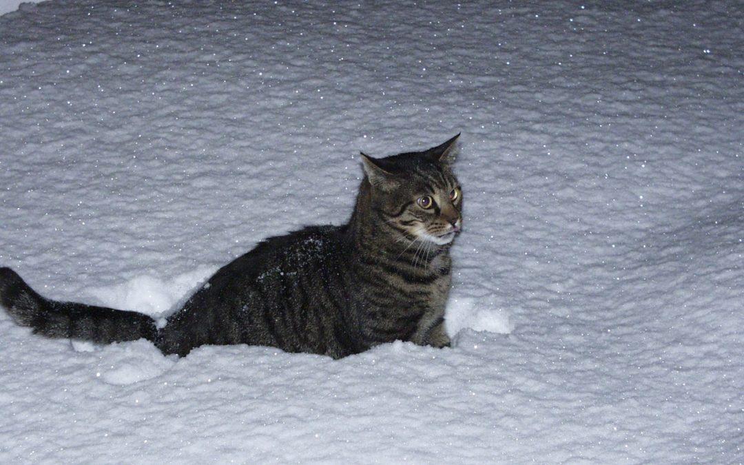 Chat dehors la nuit en hiver – Comment protéger son chat du froid ?
