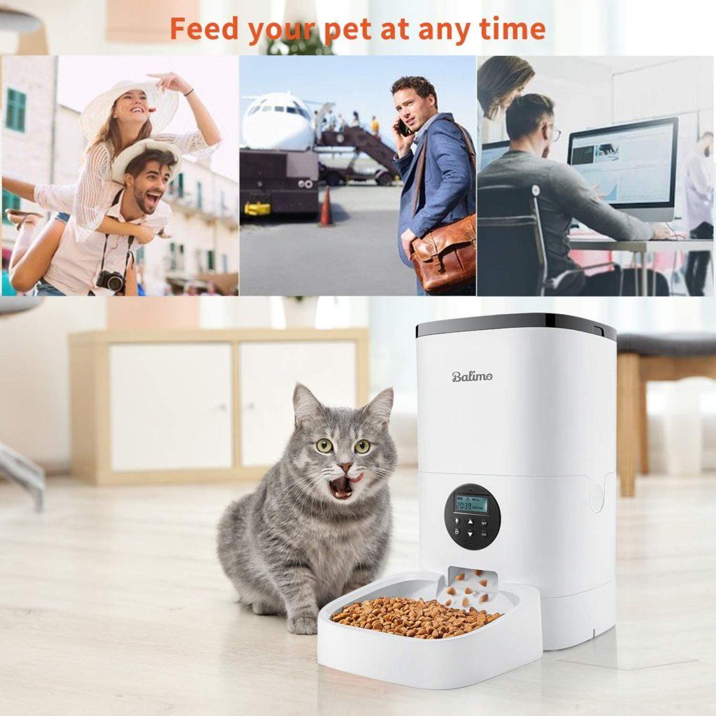 comment réguler un chat qui mange trop