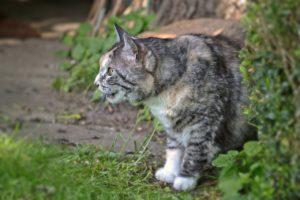 Mon chat est trop gros  - Meilleur régime pour chat en surpoids