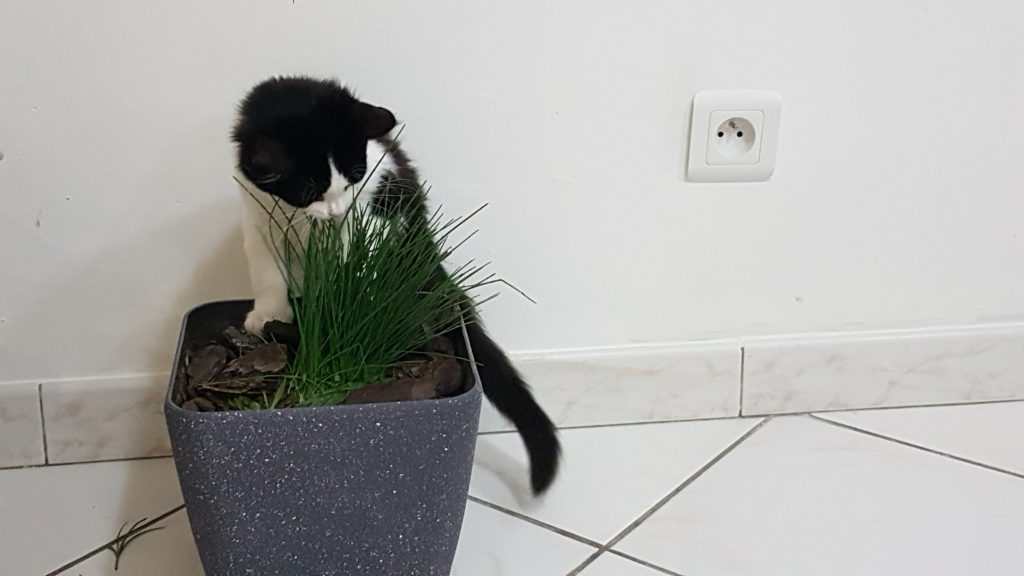 éduquer dès son jeune âge un chat à apprendre