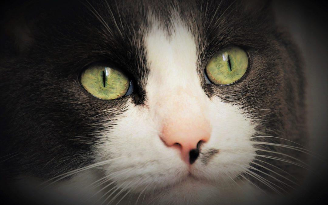 猫可以在黑暗中看见吗?
