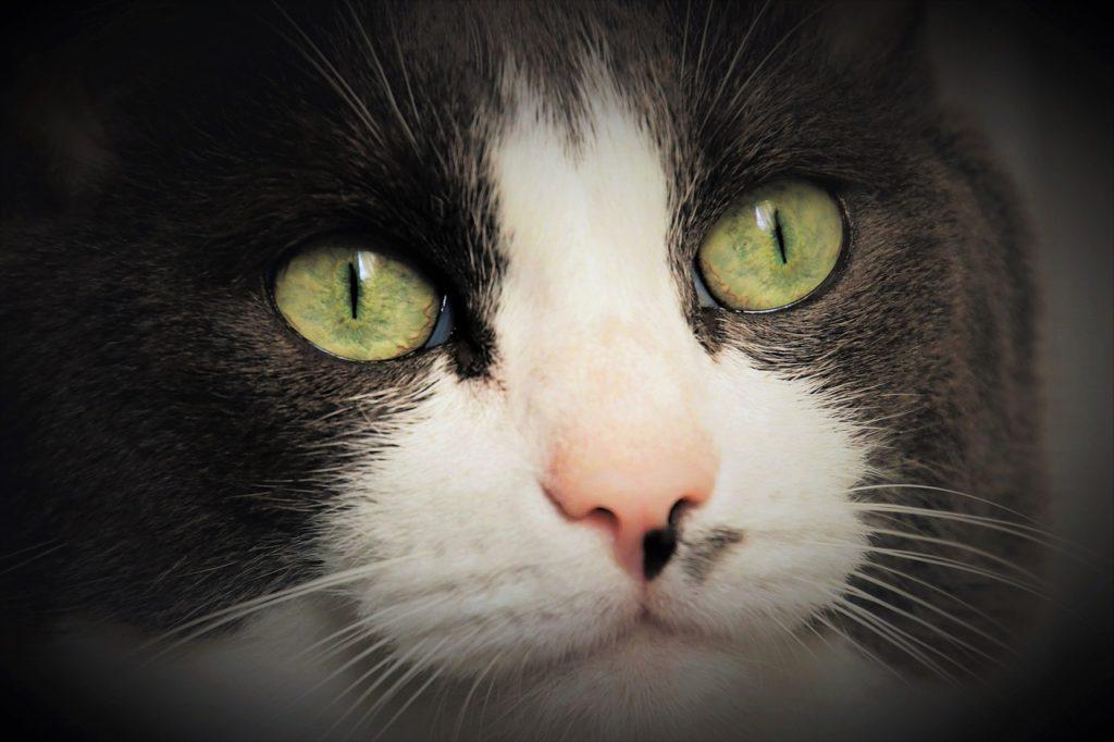 A quel âge un chaton boit de l'eau ? Comment faire boire un chaton