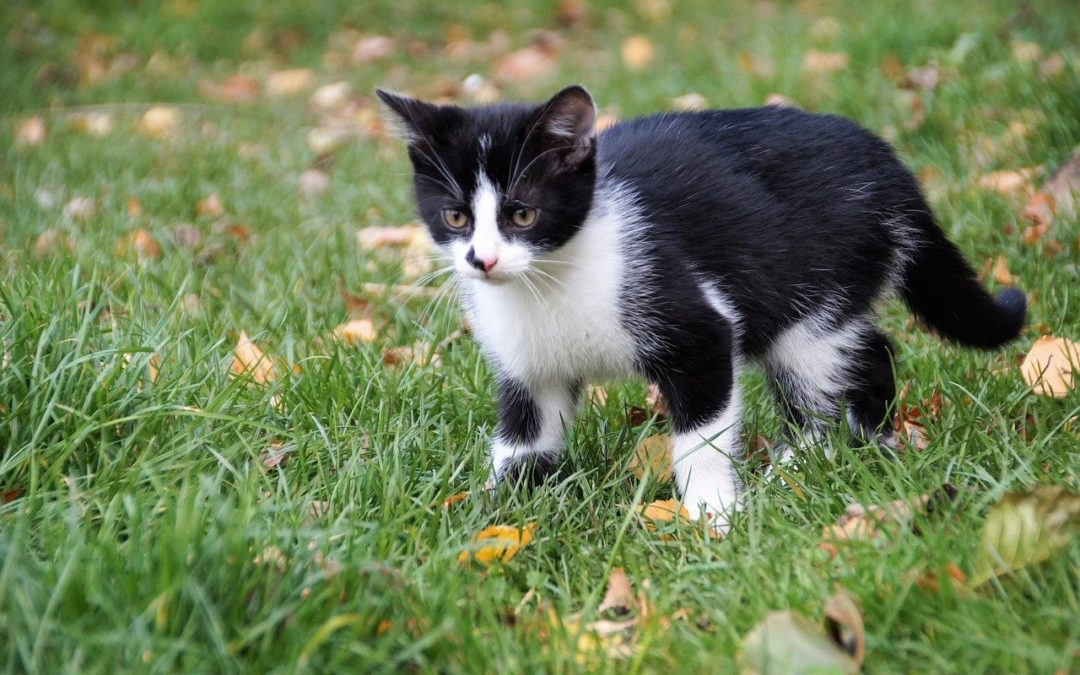 Can a vaccinated cat get typhus?