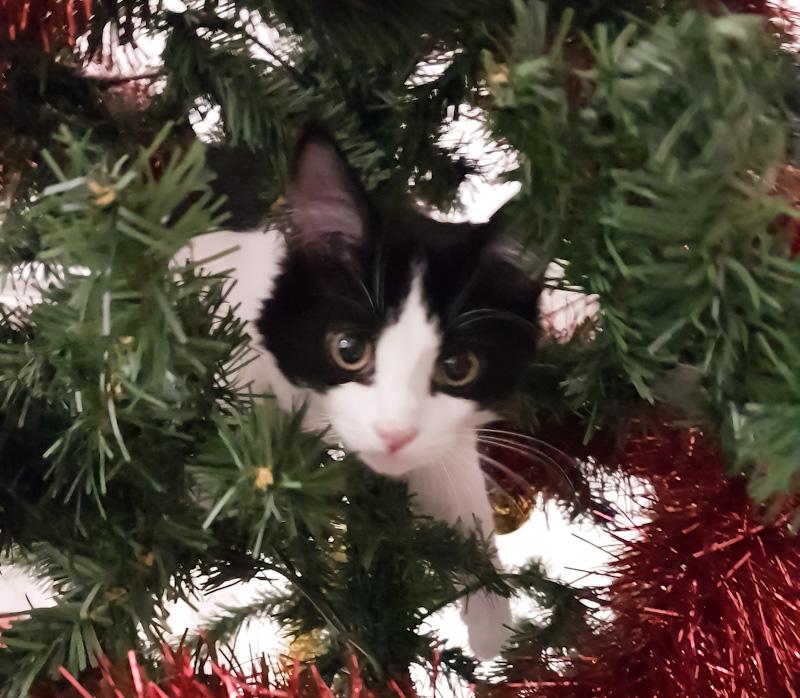 Faire obéir un chat par la dissuasion