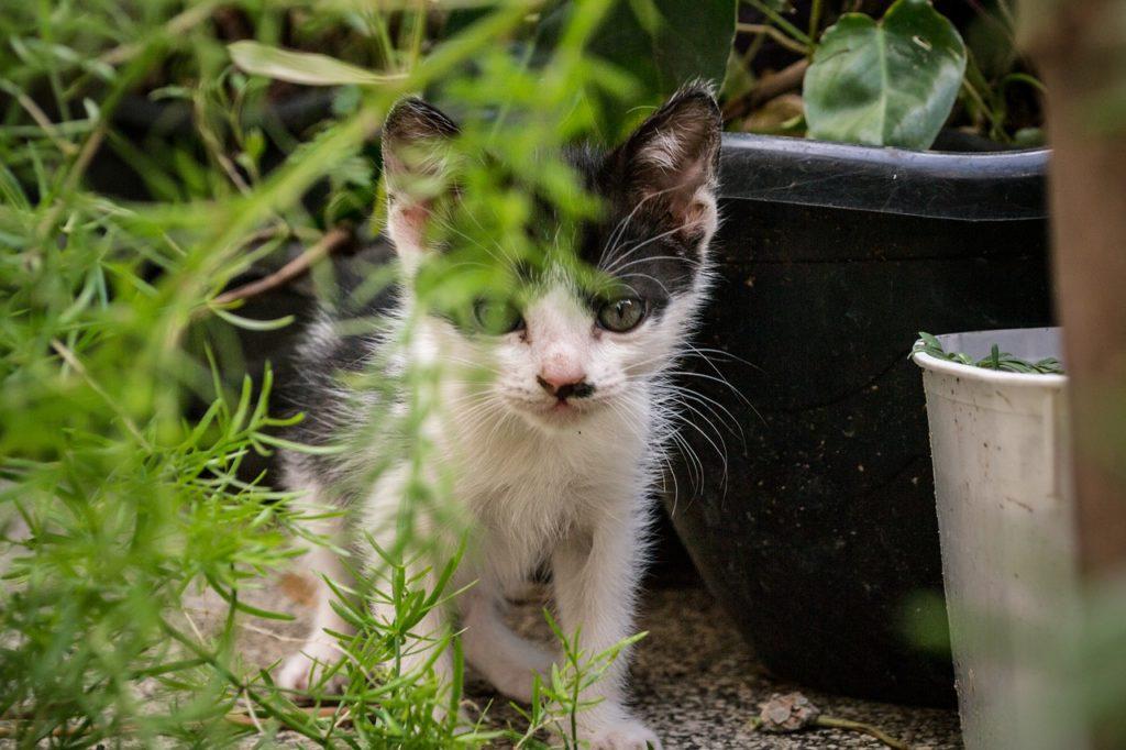 Comment savoir si un chaton est abandonné ou perdu ?