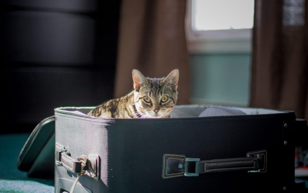 Combien de temps un chat peut rester sans uriner ?