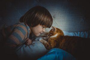 Tique du chat transmissible à l'homme