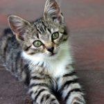 A quel âge peut on laver un chat ?