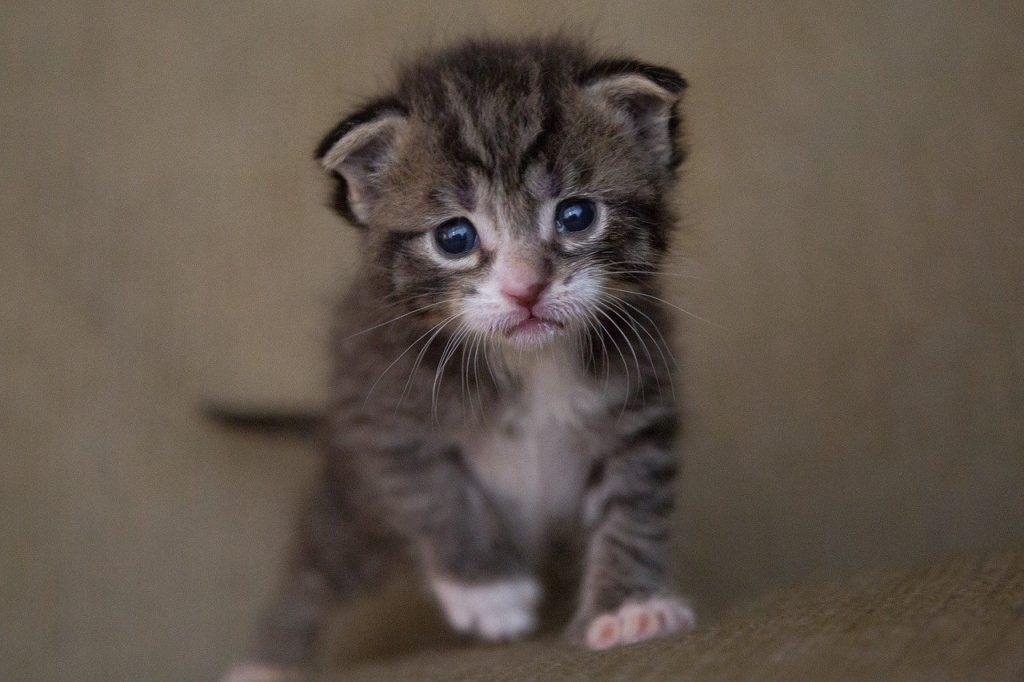 A quel âge vermifuger un chaton - A l'âge de 2 mois ?