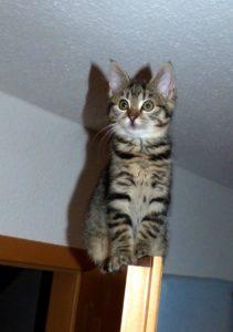 Comment attraper un chat qui ne se laisse pas approcher