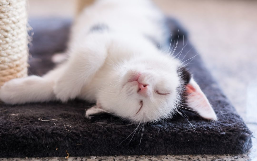 How long does a 2 month old kitten sleep?
