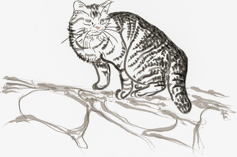 Un chat peut il mourir coincé dans un arbre ?
