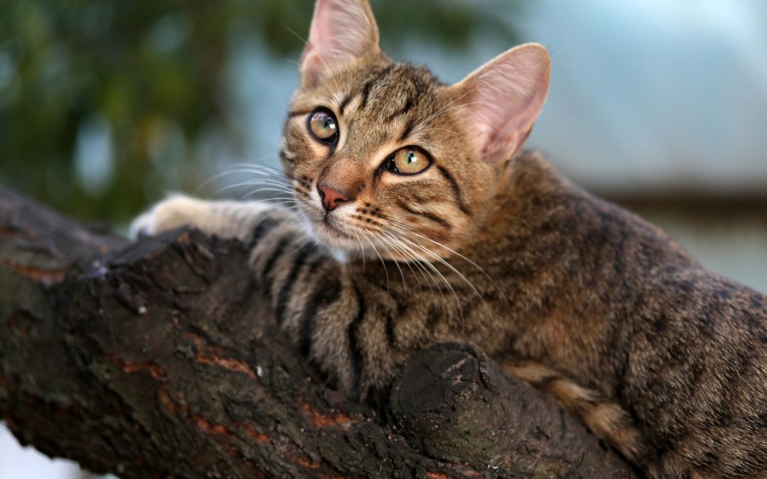 Can a cat die in a tree? How long stuck?