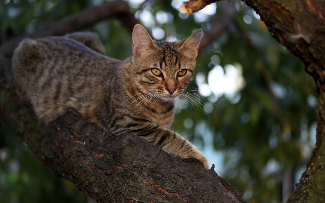 Chat bloqué – Qui appeler pour sauver un chat ?