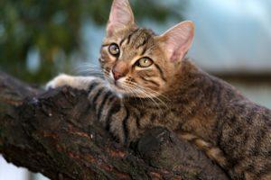 UChat bloqué - Qui appeler pour sauver un chat coincé