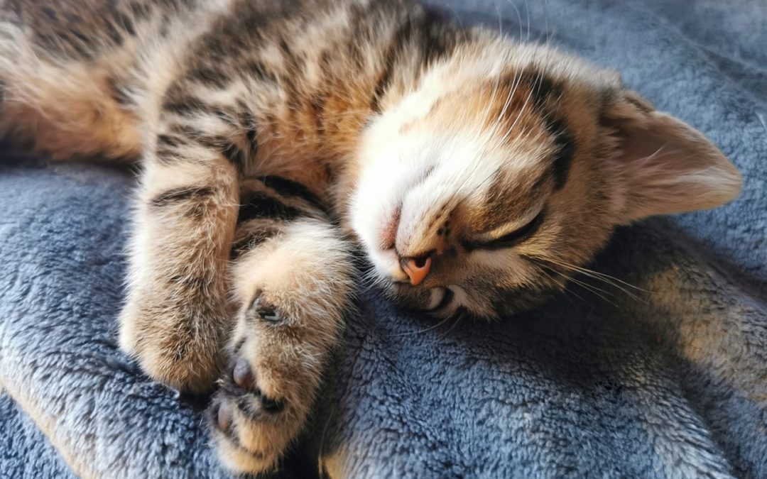 How long does a 3 month old kitten sleep? Hours of sleep per day