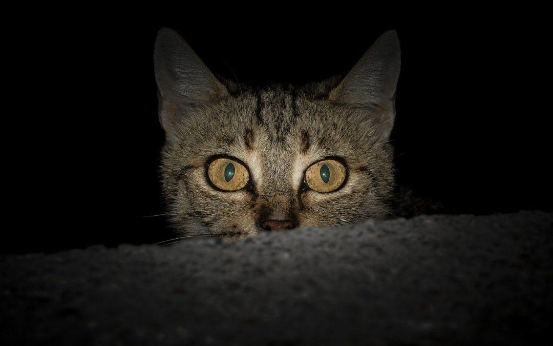 Mon chat veut sortir la nuit – Laisser son chat dehors la nuit ?
