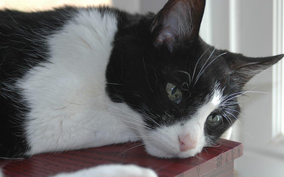 Comment empêcher un chat de monter sur les meubles ?