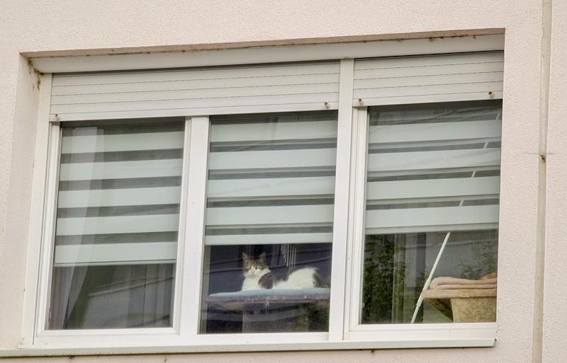 HAMAC de fenêtre pour empêcher un chat de grimper sur les meubles