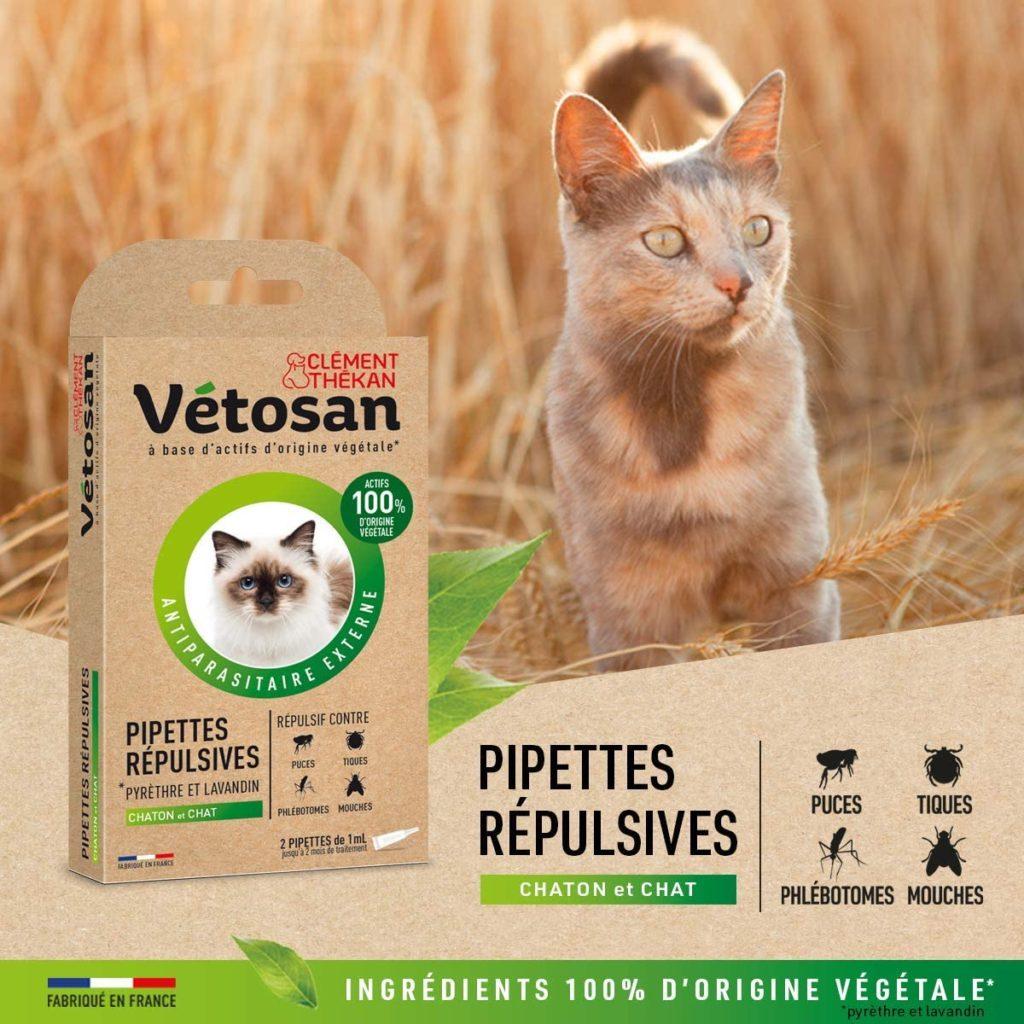 A quel âge traiter un chaton contre les puces et les tiques ?