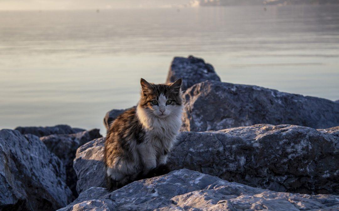 Emmener son chat à la plage – Peut on faire baigner un chat dans la mer ?