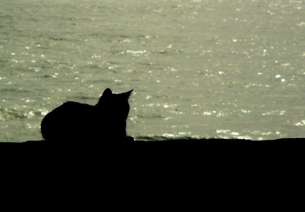 Emmener son chat à la plage – chat dans la mer