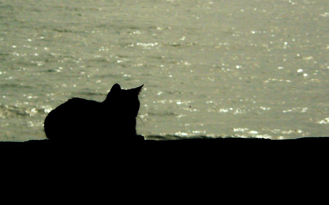 Prendre son chat en vacances – Peut on emmener son chat partout ?