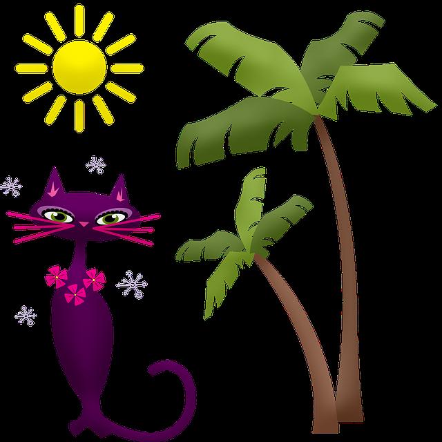 Où aller en vacances avec son chat – 3 bons hôtels qui acceptent les chats